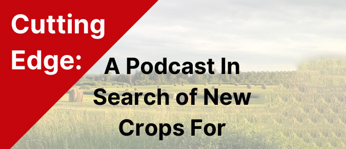 The Cutting Edge Podcast Episode 7: Naked (hulless) Barley