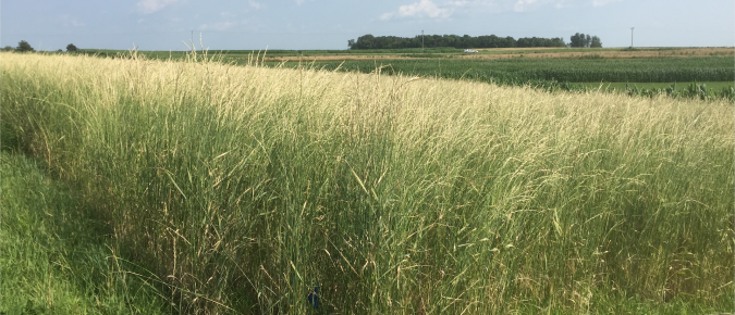 Post-Emergent Weed Control and Summer Annual Forage Options