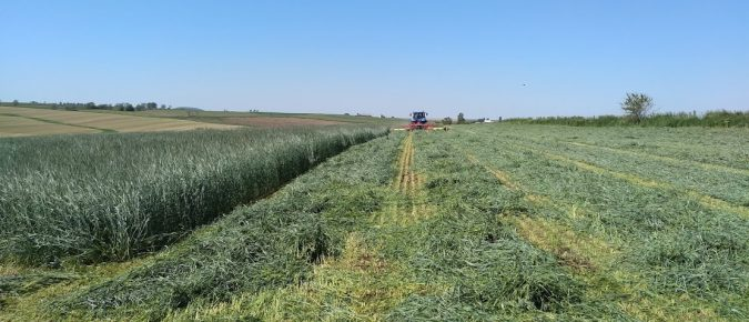 Soybean Growth Stages and Roller Crimped Rye