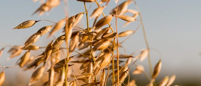 Disease Management in Small Grains and Corn Fertility Guidelines