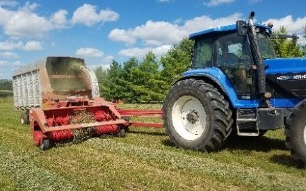 Timing of Fall Alfalfa Harvest Can Impact Long-Term Viability of the Stand