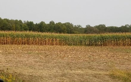 Developing a harvest strategy for the 2021 corn silage harvest